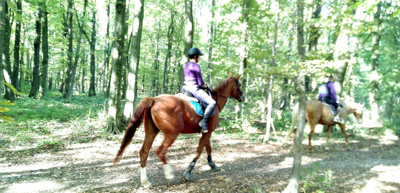 forestal horse riding