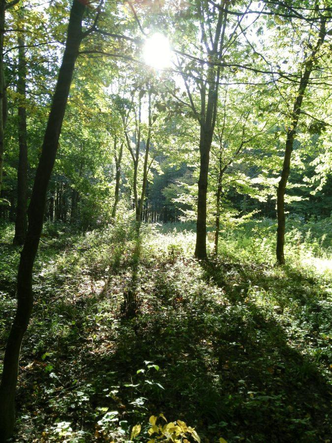 forest enlightening