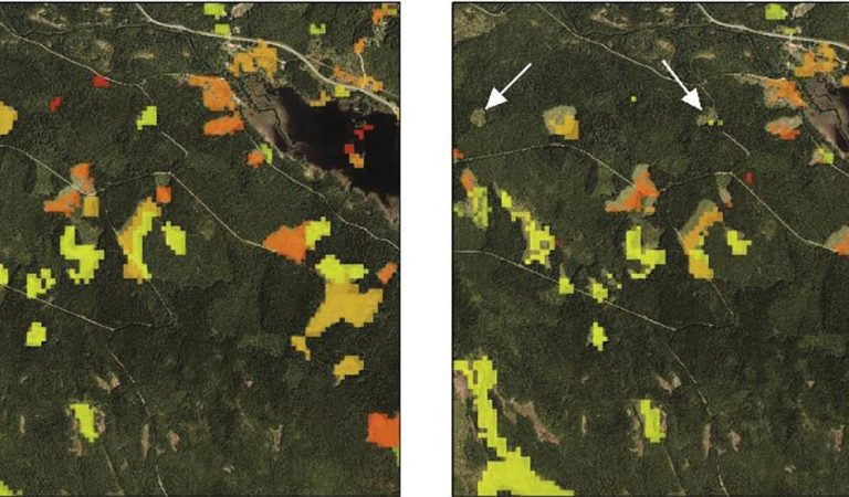 remotely sensed forest stand geodata